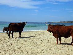 Playa de Bolonia, Tarifa.
