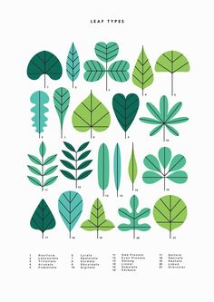 Leaf Types - - - - Sarah Abbott - - -