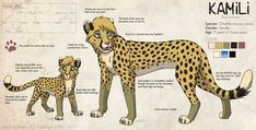 Denahi is back in the story. is no longer a character in Keystones due to a story change! And yes, his name is apparently the same as a character in Disney's Brother Bear. Cheetah Drawing, Cat Drawing, Big Cats Art, Cat Art, Animal Sketches, Animal Drawings, Anime Snow, Lion King Art, Tiger Art