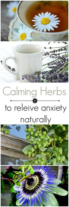 Calming herbs for anxiety when stress gets to be too hard to handle. Ideas for teacher wellbeing and stress management.     Ideas, resources and activities for teaching GCSE English    Check out my blog www.gcse-english.com   