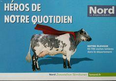 Élevage bovin dans le département du Nord.
