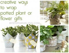 Ten Creative Ways to Wrap Potted Plants and Flowers - Quick and Easy Gift Ideas