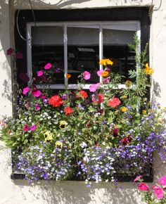 Perfect Cottage window box full of frothy foliage and cottage garden flowers. Cottage Windows, Garden Windows, Window Box Flowers, Window Boxes, Window Box Plants, Most Beautiful Flowers, Beautiful Gardens, Garden Inspiration, Garden Ideas