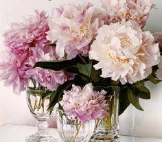 Loving Peony Roses