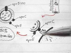 there 4 little videos are so good at mapping out Lipoprotein metabolism!