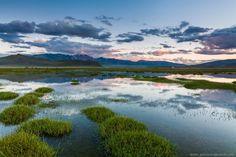 Монголия — желто-зеленая страна. Желтые цвета — это, конечно же, пустыня, сотни оттенков коричневого, красного… А зеленый — цвет холмов и склонов гор.