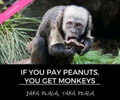 Monkey, Animals, Jumpsuit, Animales, Animaux, Monkeys, Animal, Animais, At Sign