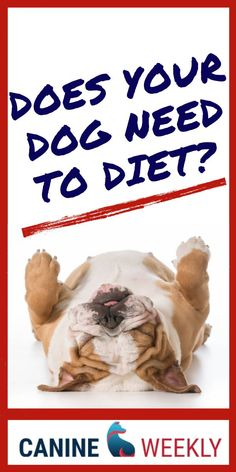 Doggie Diet: How to Help Your Overweight Dog Get Healthy Make Dog Food, Best Dog Food, Homemade Dog Food, Dog Breeds Little, Top Dog Breeds, Puppy Care, Dog Care, Dog Weight, Weight Loss