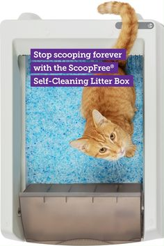 The PetSafe ScoopFree Original Self-Cleaning Cat Litter Box is an automatic litter box that stays fresh and clean without the hassle of scooping. Simply plug in the box and watch it work. Cute Baby Animals, Animals And Pets, Self Cleaning Litter Box, Clumping Cat Litter, Cat Hacks, Pet Vet, Baby Cats, Diy Stuffed Animals, Cat Toys