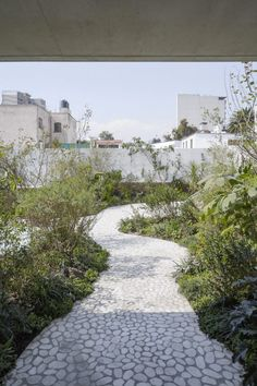 Verdant garden with white marble paths tops renovated Mexican home by Zeller & Moye