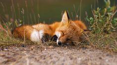 Beautifully sleeping. <3