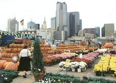 Dallas Farmers Market. I love Texas because I've never met anyone from east texas that failed to be loving and kind. They are all super-sweet, and will hug you every chance they get. My mother regrets ever having left.