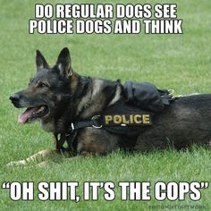 K, here are 9 carefully selected police dog memes. EnjoyK, here are 9 carefully selected police dog memes. EnjoyK, here are 9 carefully selected police dog meme Funny Shit, Funny Dog Memes, Funny Animal Memes, Cute Funny Animals, Funny Animal Pictures, Cat Memes, Funny Cute, Funny Dogs, Cute Dogs