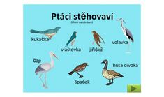 Související obrázek Bird, Animals, Google, Carnavals, Animales, Animaux, Birds, Animal, Animais