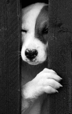 Black & White Photography - Dog http://www.pinterest.com/rituja7/