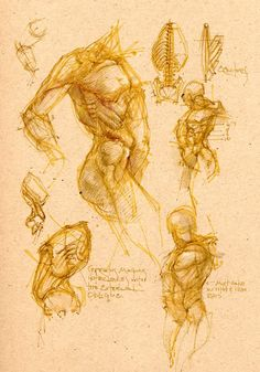 Art: ••• ‡‡‡‡‡‡ ••• The • Book • of • Bones ••• ‡‡‡‡‡‡ ••• - Page 10 Human Anatomy Drawing, Anatomy Study, Body Drawing, Gesture Drawing, Figure Drawing Reference, Anatomy Reference, Man Sketch, Anatomy Sketches, Anatomy For Artists