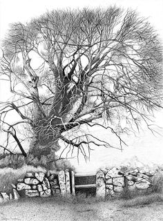 Limited Edition Landscape Print of Original Pen and Ink Drawing of An Elm Tree.