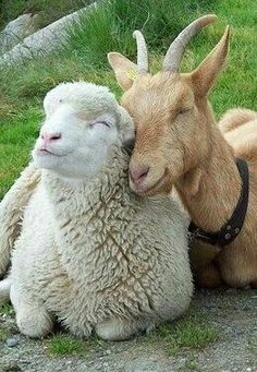 Tendresse animale