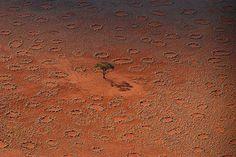 In einigen westafrikanischen Gebieten werden regelmäßig sogenannte »Feenkreise« entdeckt. Das sind kreisförmige, kahle Stellen, die wie mit einem Zirkel erstellt erscheinen und sehr regelmäßig ange…