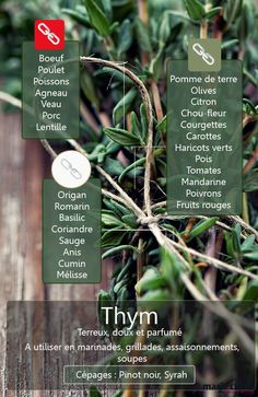 thyme :how to use it Aromatic Herbs, Spices And Herbs, Seasoning Mixes, Dressing, Different Recipes, Baby Care, Food Hacks, Spice Things Up, Cooking Tips