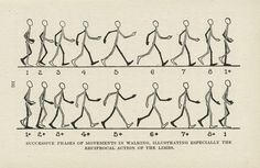 SUCCESSIVE PHASES OF MOVEMENTS IN WALKING, ILLUSTRATING ESPECIALLY THE RECIPROCAL ACTION OF THE LIMBS