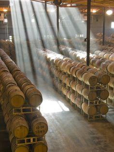 Shafts of Light in Barrel Room of Montevina Winery, Shenandoah Valley, CA (Print by Janis Miglavs)