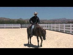 Why talking to your horse means nothing