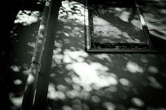 木漏れ日 the sunbeams streaming down through the leaves of trees.
