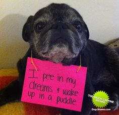 """I pee in my dreams and wake up in a puddle. // Even with their """"wet dreams"""", I STILL miss having a pug."""