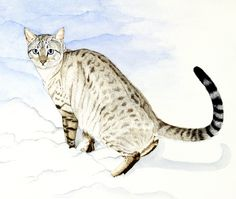 Silver And Enamel Jewellery and Watercolour Pet Portraits Enamel Jewelry, Archer, Bengal, Pet Portraits, Still Life, Watercolour, Wildlife, Cats, Painting