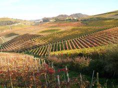 barolo vingårdar