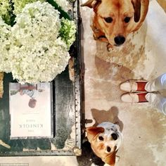 Adding a creative touch, Meghan uses a weathered vintage chest as a unique coffee table and decorates it with fresh flowers and one of her favourite cookery books