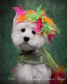 Westie West Highland White Terriers Dogs  YOU DO KNOW, MISS DOLLY, YOU REALLY ARE THE CAT'S PAJAMAS !!