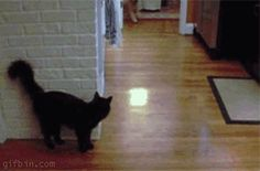 Fail :D Click on image to see gif :D