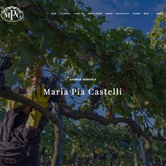 Nuovo sito web per l'Azienda Agricola Maria Pia Castelli. www.mariapiacastelli.it