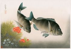 Familiar Fishes of Nippon Black Sea Bream c1938 11 by 15 1/2 inches from Bakufu Ohno Familiar Fishes, Flowers & Birds 1888-1976