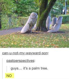 A palm tree...