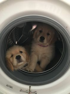 What are you doing in the washer? Animals And Pets, Baby Animals, Funny Animals, Cute Animals, Puppies And Kitties, Cute Puppies, Cute Dogs, Doggies, Funny Animal Pictures