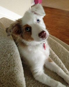 ASYMMETRIE door de vlek die de hond aan de ene kant wel heeft, maar aan de andere kant niet, is de kop asymmetrisch. het is niet hetzelfde aan beide kanten.