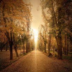 Parcul Central in Cluj-Napoca, Cluj  Locul binecunoscut pentru hămăceală. Când am intrat pentru prima dată pe iarbă simțeam o stânjeneală, simțeam privirile oamenilor și mă așteptam să primesc o amendă în curând. Acum e un lucru firesc la Cluj sa te duci și să îți atârni hamacul in parc.