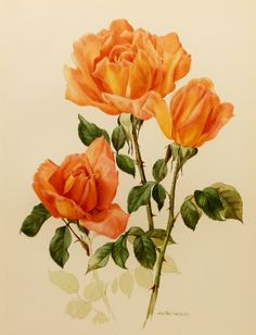 Rose Print, 1960s Flower Botanical, Summer Decor (Orange Wall Art, Antique Rose Print Illustration No. 67) on Etsy, $8.00