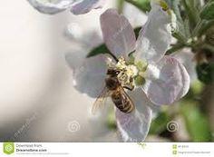 Výsledok vyhľadávania obrázkov pre dopyt orchard trees