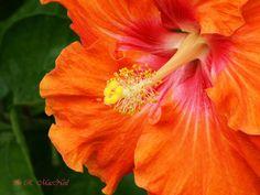 macro flowers photography | Macro Flowers