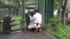 從被扔糞到信任 保育員與黑猩猩鬥智10年