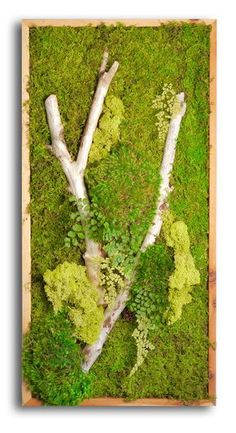 18x36 Moss Wall Art. Light colored wood frame. by WabiMoss on Etsy - $350