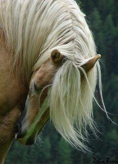 Blonde Mane