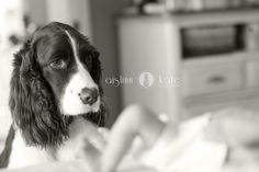 Dog pictures     Photojournalism     Children's portrait     black and white    newborn pictures     Aislinn Kate Photography     Pensacola Florida photographer
