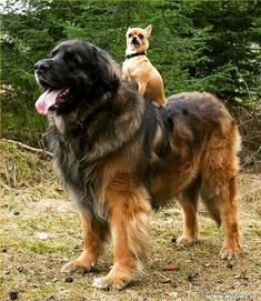 Buddys  . . . . #doglovers #dogofinstagram #dog #dogsworldwide #caesdeportugal #lovedogs #animalsofinstagram #animallover #caes #ilovedogs #instadog #instaanimals #instaanimal