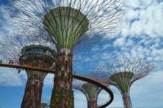 supertrees-singapore-8[7]