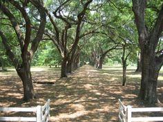 Roseland Plantation - Jasper County South Carolina SC